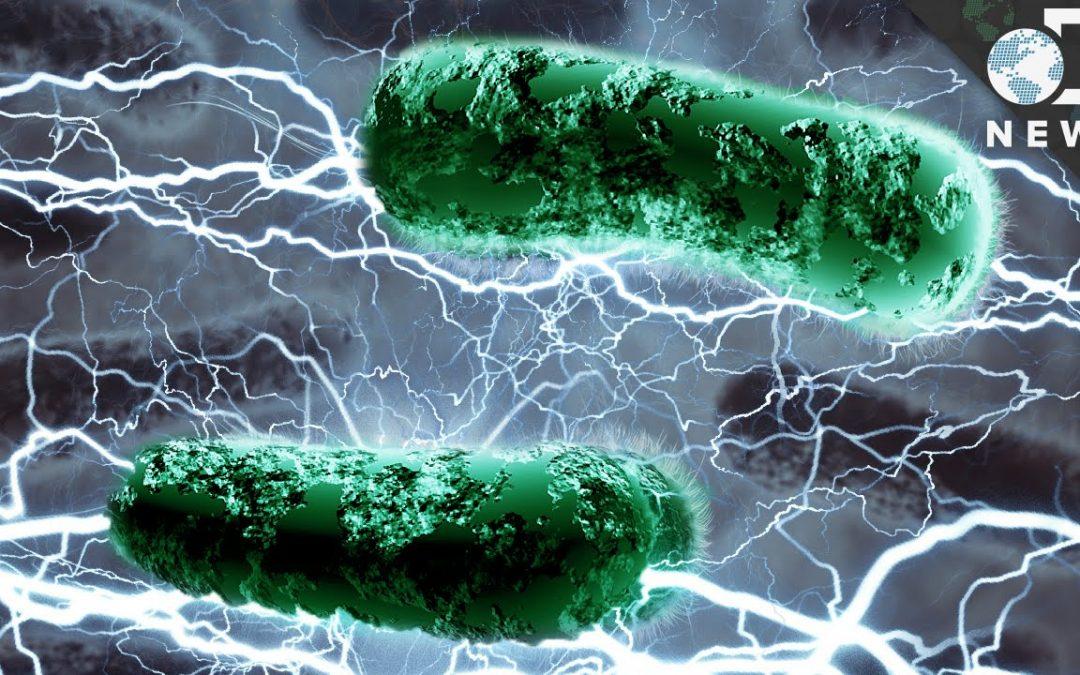Les bactéries produisent de l'électricité