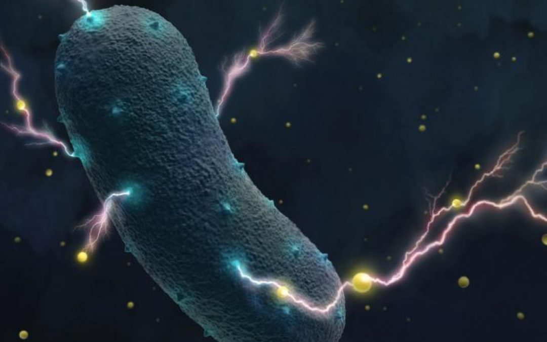 Bacteria may very well become the source of magical powers